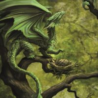 AN75 Forest Dragon