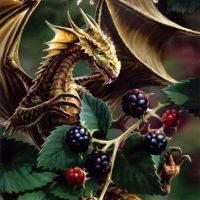 Blackberry Dragon Anne Stokes birthday card AN19