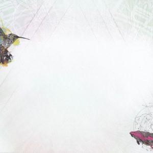 Karin Roberts hummingbird whale envelope