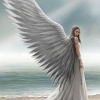 Spirit Guide Anne Stokes angel card AN39